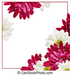アスター, 花, そして, フレーム