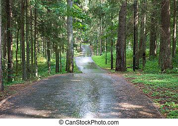 アスファルト坑道, によって, ∥, 森林, 雨 の後