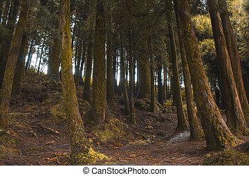 アゾレス, sao, ポルトガル, 島, アル中, 緑の森林, miguel