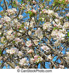 アップル, sky., に対して, 木, 咲く, 青