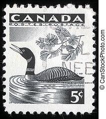 アビ, 切手, ショー, 印刷される, カナダ