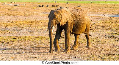 アフリカの象, 中に, 自然, 生息地, tarangire の国立公園, タンザニア, アフリカ。