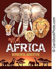 アフリカ, サファリ, ポスター, ∥で∥, 野生 動物, スケッチ