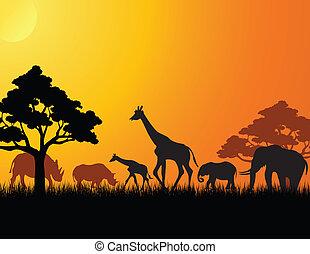 アフリカ, シルエット, 動物