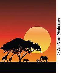アフリカ, シルエット