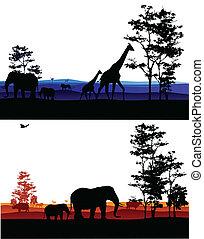 アフリカ, シルエット, 背景