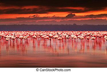 アフリカ, フラミンゴ, 上に, 日没
