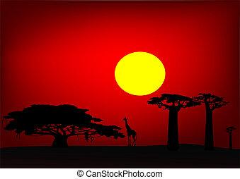 アフリカ, 日没, -, ベクトル