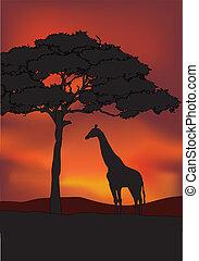 アフリカ, 日没, 背景, gira