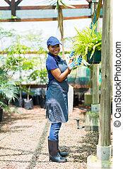 アフリカ, 温室, 仕事, 庭師
