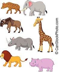 アフリカ, 漫画, コレクション, 動物