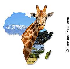 アフリカ, 野生生物, 地図, デザイン