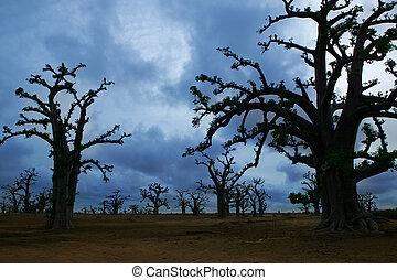 アフリカ, baobab の木, 中に, a, 曇った日