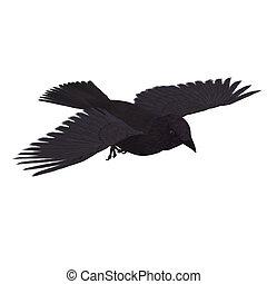 アメリカ人, crow., 3d, レンダリング, ∥で∥, クリッピング道, そして, 影, 上に, 白