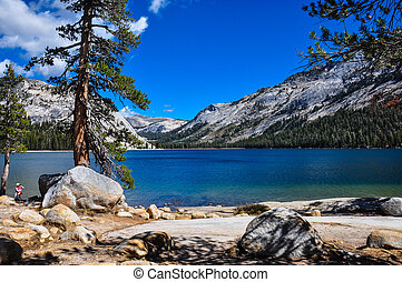 アメリカ, 国立公園, 素晴らしい, カリフォルニア, yosemite