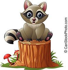 アライグマ, かわいい, 木, 丸太