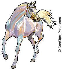 アラビアの馬, 白