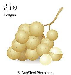 アルファベット, 意味, ベクトル, longan, 背景, 成果, タイ人, 白