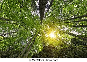 アルプス, montain, 森林, 風景