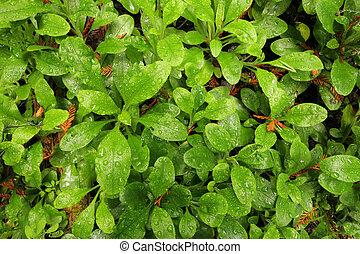 アル中, dewy, 緑の森林, 床