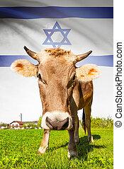 イスラエル, 牛, シリーズ, -, 旗, 背景