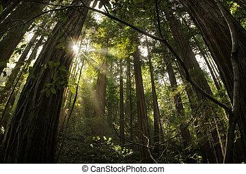 イチイモドキの森林