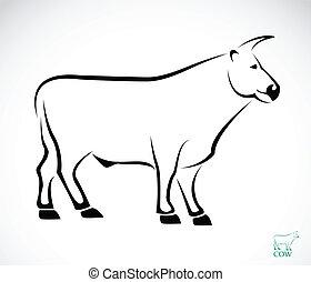 イメージ, ベクトル, 牛