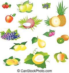 イメージ, ベクトル, fruits.