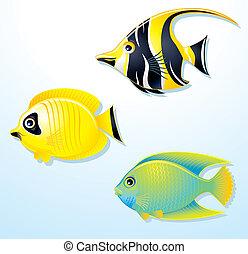 イラスト, の, かわいい, 熱帯の魚