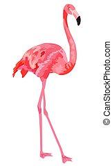 イラスト, バックグラウンド。, フラミンゴ, 白, ピンク, 隔離された