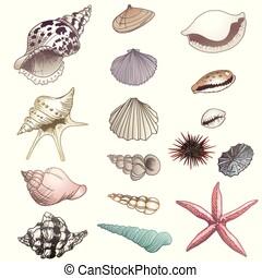 イラスト, 貝殻, ベクトル