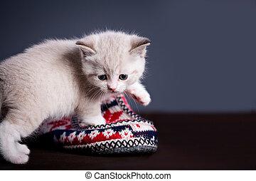 イラン人, キティ