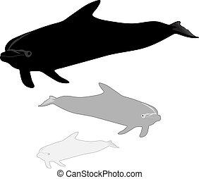 イルカ, 動きなさい