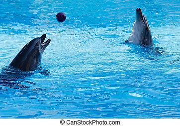 イルカ, 遊び, pool., バレーボール, 2