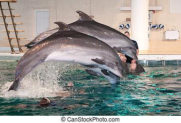 イルカ, dolphinarium, ショー