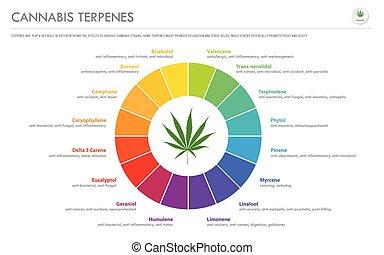 インド大麻, ビジネス, terpenes, infographic, 横