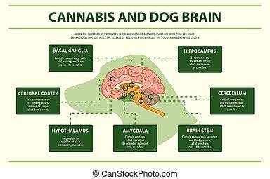 インド大麻, 犬, infographic, 横, 脳