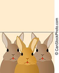 ウサギ, 3