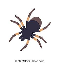 エキゾチック, 国内, くも, 気味が悪い, 飼いならされる, style., 隔離された, トロピカル, バックグラウンド。, ベクトル, tarantula, 白, 平ら, カラフルである, イラスト, animal., 肉食性, 漫画, 危ない, arachnid., 有毒である, ∥あるいは∥