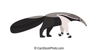 エキゾチック, 平ら, 珍しい, 動物, カラフルである, 愛らしい, 隔離された, イラスト, style., 食虫性, バックグラウンド。, america., ベクトル, 細長い, anteater, 野生, 白, muzzle., 種, 漫画, ネイティブ