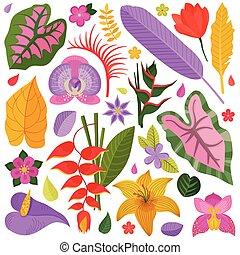 エキゾチック, 熱帯の花, そして, 葉, コレクション