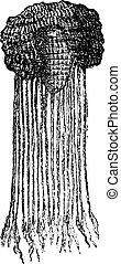 エジプト人, engraving., かつら, 型