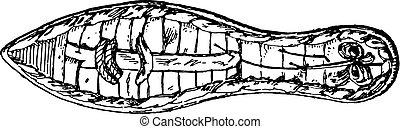 エジプト人, engraving., 型, 底