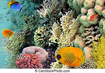 エジプト, 写真, 珊瑚, 植民地, 海, 赤