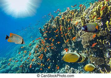 エジプト, 水中, 風景, 紅海