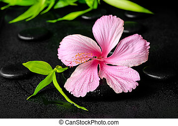 エステ, 概念, の, ピンク, ハイビスカス, 花, そして, 小枝, 竹, 上に, 禅, 玄武岩, 石, ∥で∥, 低下, クローズアップ