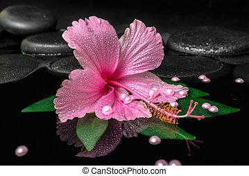 エステ, 概念, の, ピンク, ハイビスカス, 花, 上に, 緑の葉, ∥で∥, 低下, 上に, 禅, 石, そして, 真珠, ビーズ, 中に, 反射, 水, クローズアップ