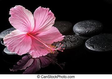 エステ, 概念, の, 咲く, ピンク, ハイビスカス, 上に, 禅, 石, ∥で∥, 低下