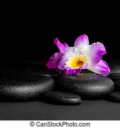 エステ, 概念, の, 紫色, 蘭, dendrobium, ∥で∥, 露, 上に, 黒, 禅, 石, 背景, クローズアップ