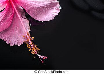 エステ, 概念, ピンク, ハイビスカス, 花, そして, 禅, 石, 中に, 水, 上に, a, bl